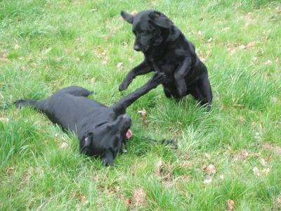 Doc Blog Dogs